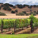 Pabrik Anggur California